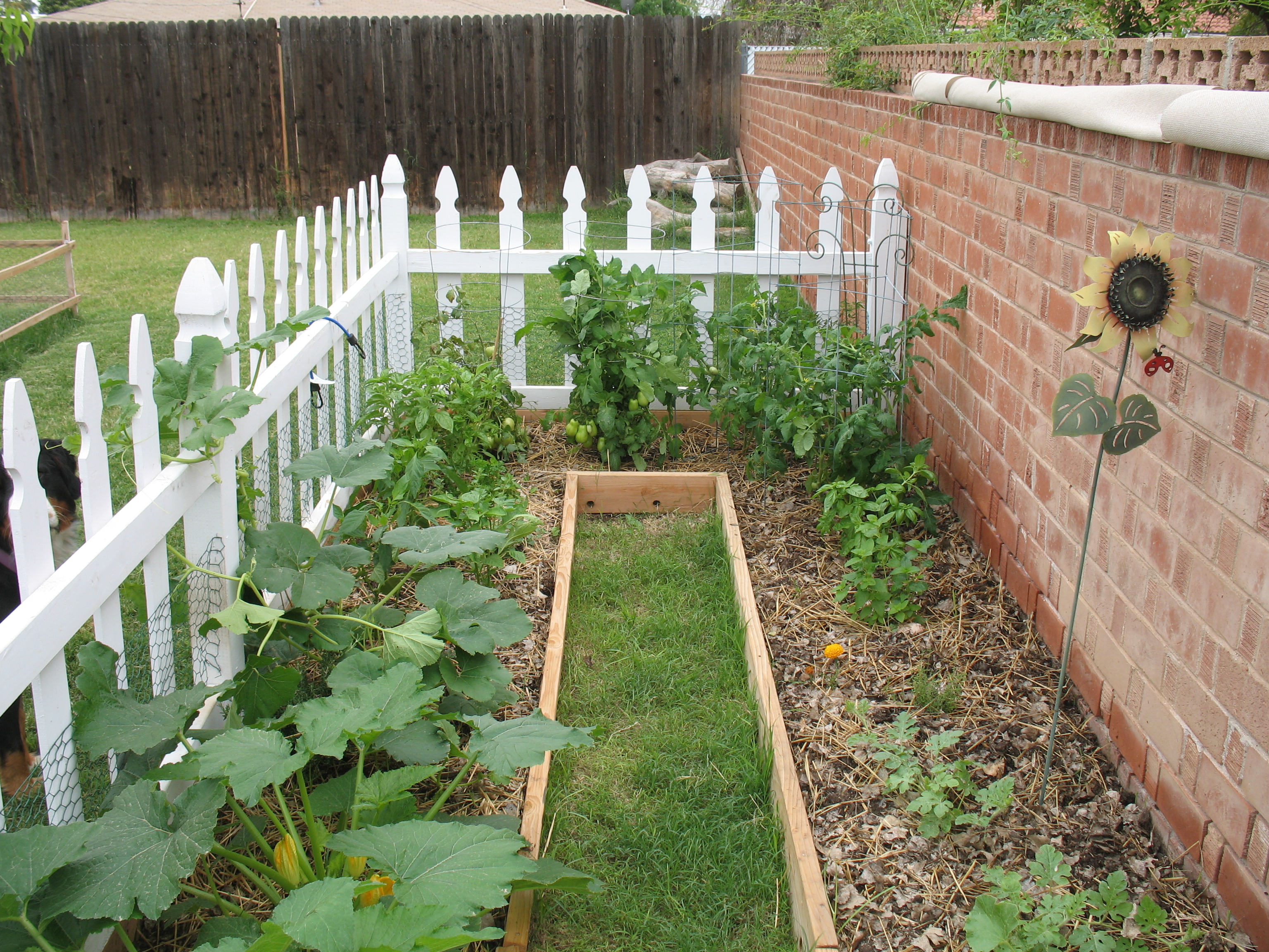 their food budget by starting backyard gardens fill your plate blog