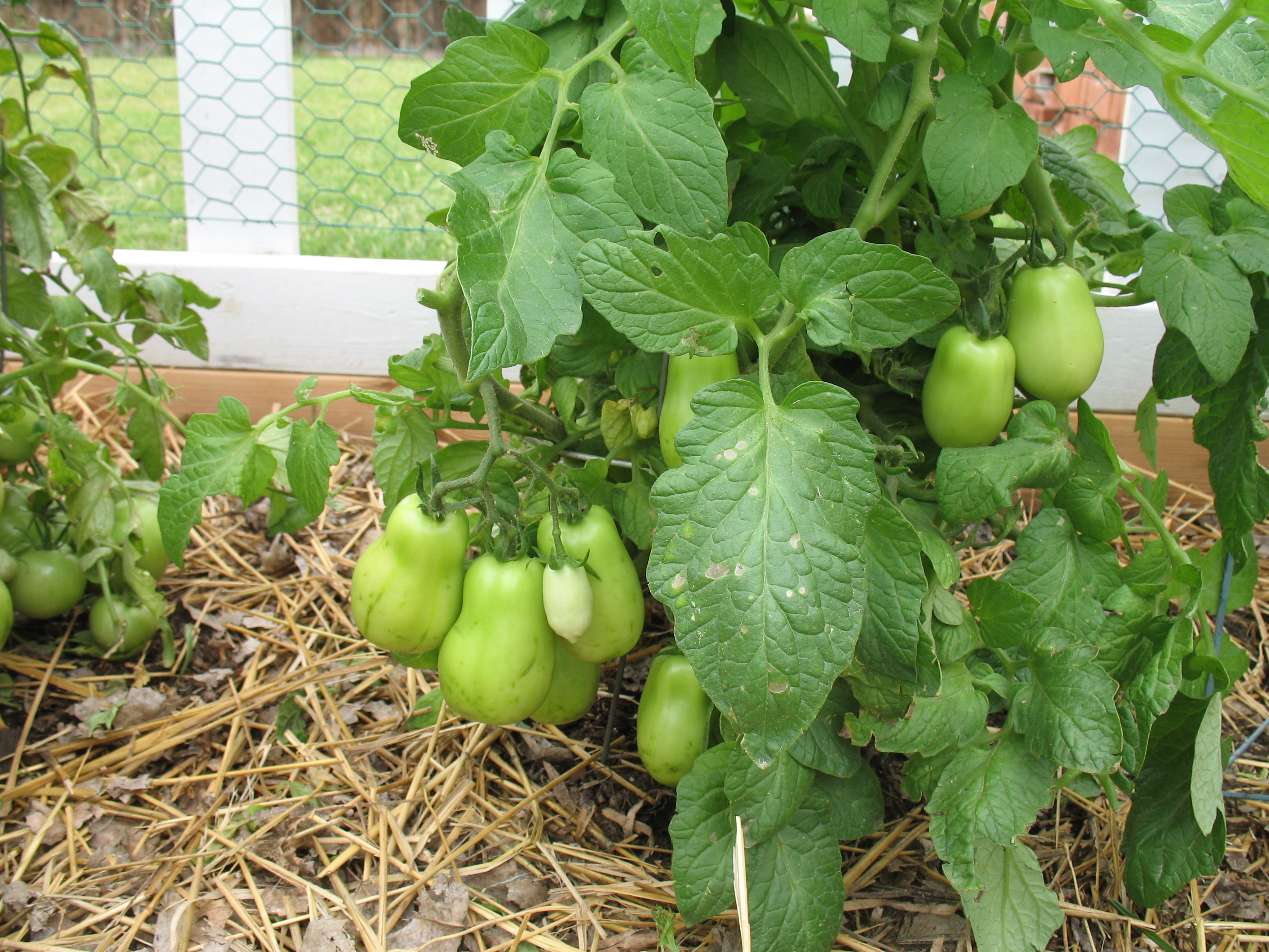 Home produce garden - Arizonans Look To Save On Their Food Budget By Starting Backyard Gardens