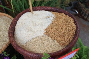 bigstock-Rice-Stages-43999477