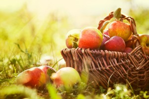 Read about all the delicious things you can do with apples this fall (photo credit: BigStockPhoto.com)