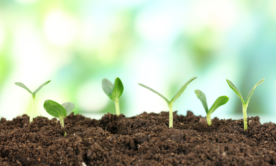 The importance of soil for Soil uses and its importance