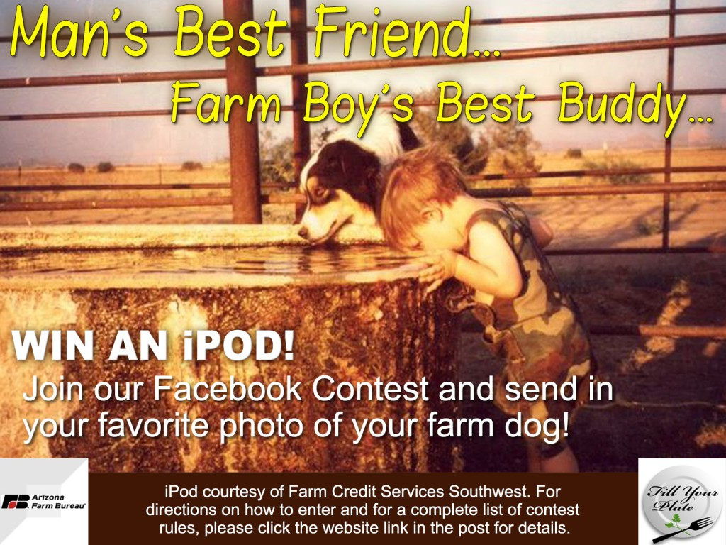 Farm Dog Contest