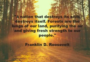 """A nation that destroys its soils destroys itself. Forests are the lungs of our land, purifying the air and giving fresh strength to our people."" Franklin D. Roosevelt Quote"
