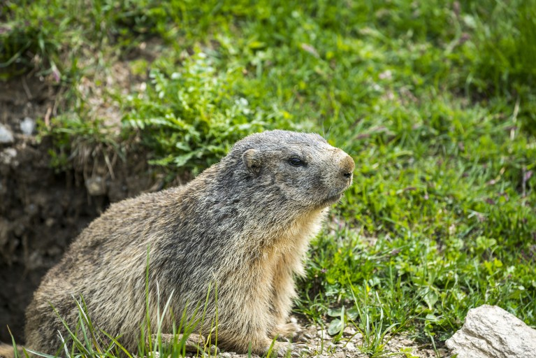 Little Known Facts About Groundhog Day