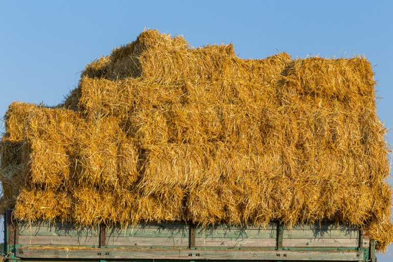 Straw Bales On A Trailer