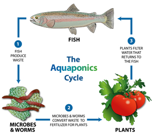 aquaponics graphic