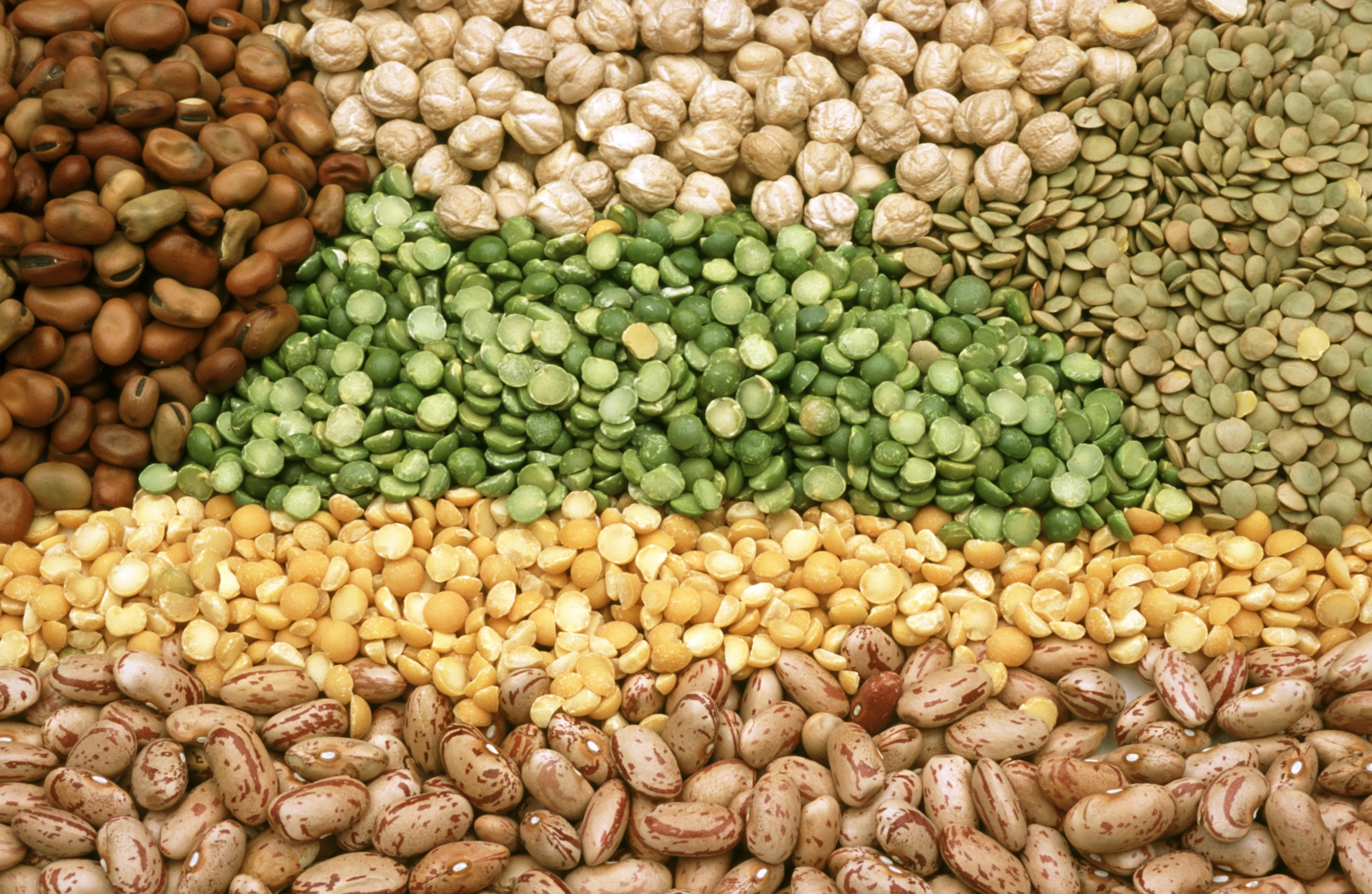 Have You Loved on Your Legumes Lately? - Fill Your Plate Blog