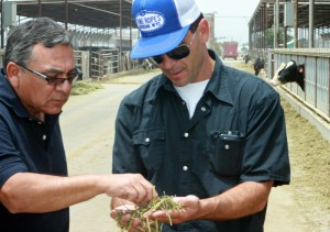 Joe Serrano, part owner of Joharra Dairy in Casa Grande is working hard to maintain healthy and productive dairy cows.