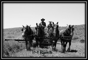 H-4 Ranch harnessing clinic