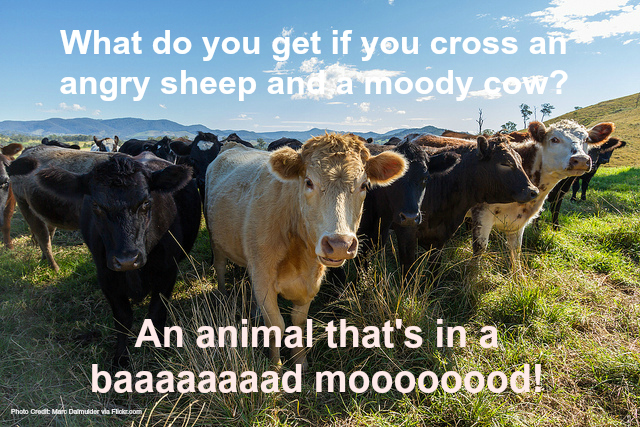 23 Funny Farm Animal Jokes That Will Make You Laugh Out Loud Fill Your Plate Blog
