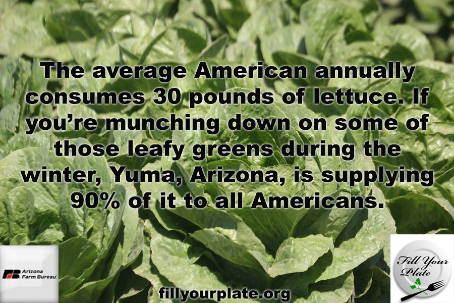 The average American consumes 30 pounds of lettuce per year!