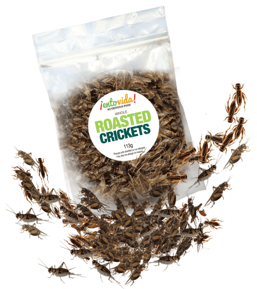 Roasted_Crickets-510x574